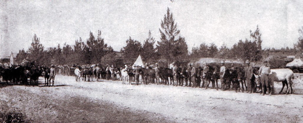 British army mules in Ladysmith