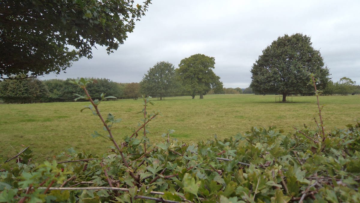 Field near Chalgrove seen over the Great Hedge: Battle of Chalgrove 18th June 1643 in the English Civil War