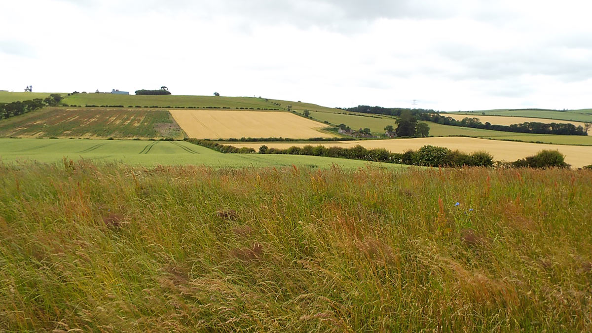 View of the Scots position from the English position before the battle: Battle of Flodden 9th September 1513