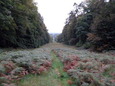 Ride in the Retz Forest at Villers Cottérêts: Battle of Villers Cottérêts on 1st September 1914 in the First World War