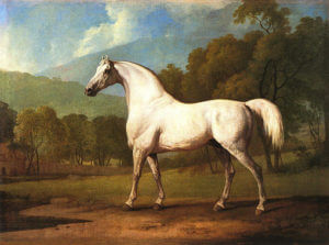 Mollwitz Grey at grass in later years: Battle of Mollwitz fought on 10th April 1745 in the First Silesian War: picture by George Stubbs
