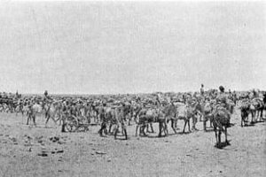 Artillery on the march in the Sudan: Battle of Omdurman on 2nd September 1898 in the Sudanese War