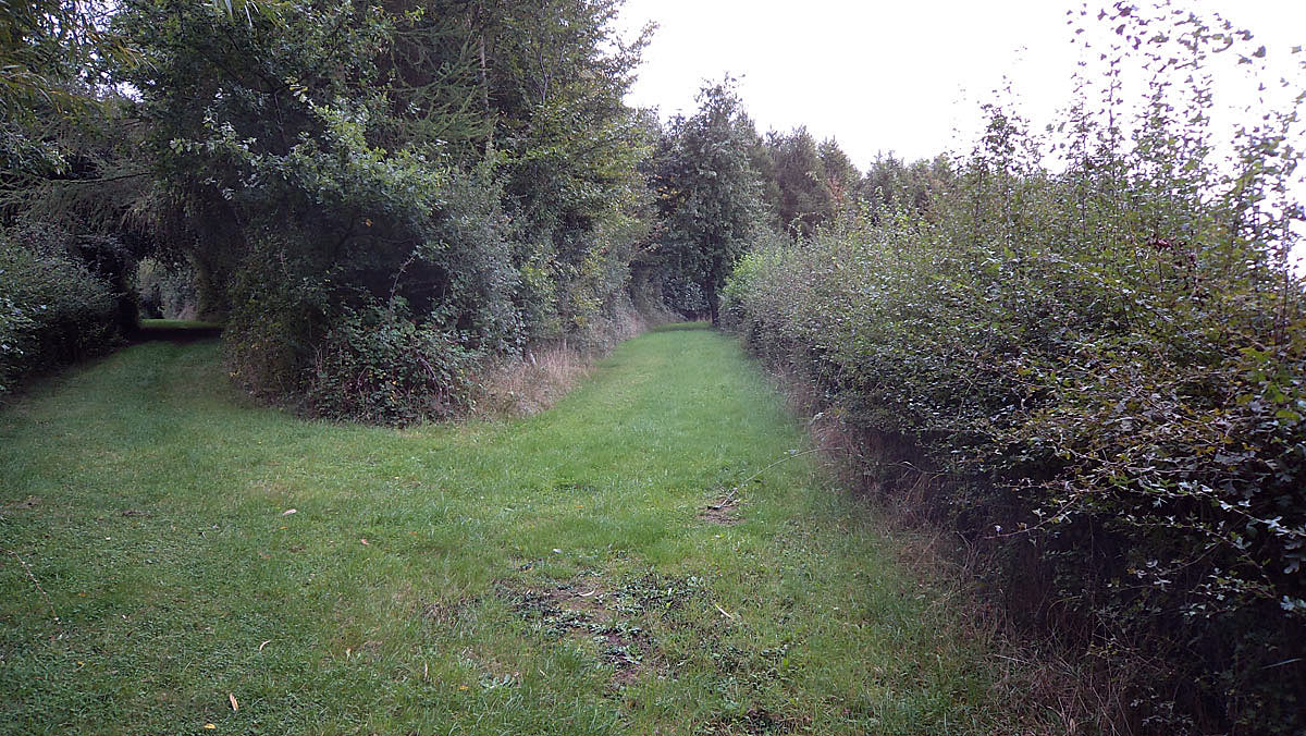 Great Hedge at Rofford near Chalgrove: Battle of Chalgrove 18th June 1643 in the English Civil War