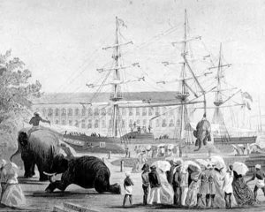 Loading elephants in Bombay on board ship for use in Abyssinia: Battle of Magdala on 13th April 1868 in the Abyssinian War