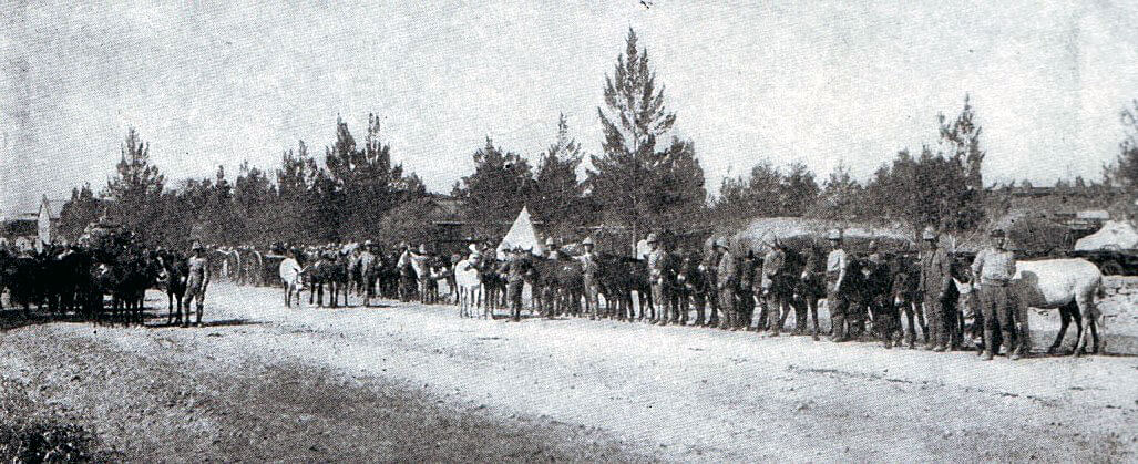 British army mules in Ladysmith in 1899 in the Boer War